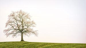 tree-3224754_960_720